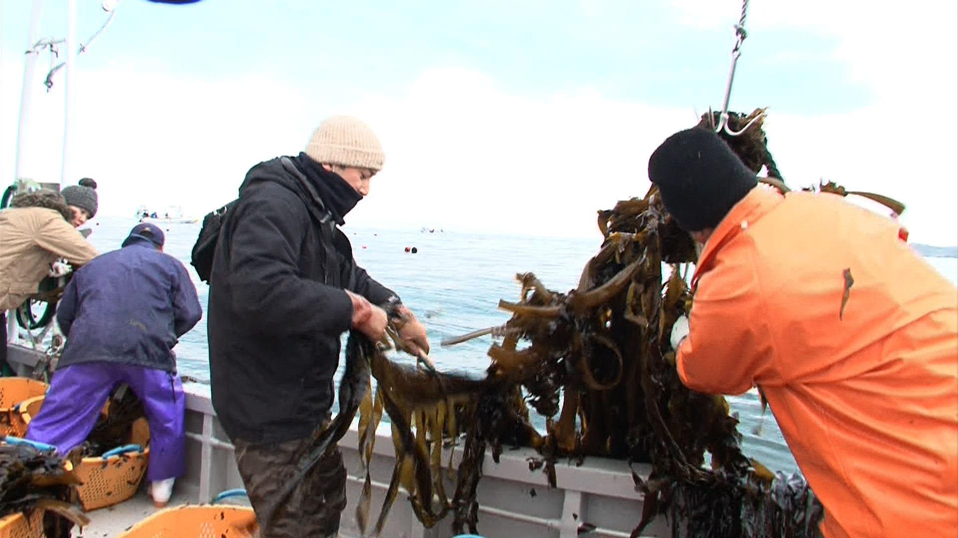 emp_seaweed.jpg